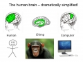 Meet Your Chimp